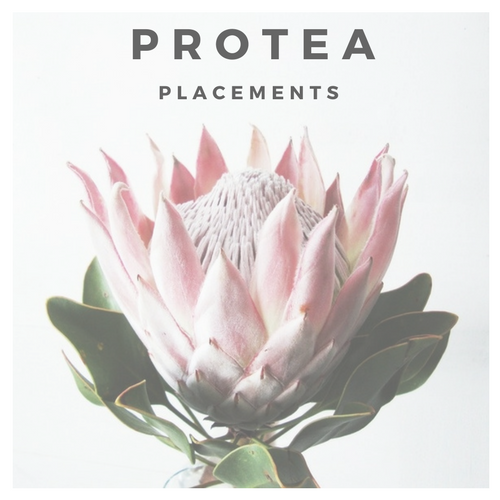 Protea Placements